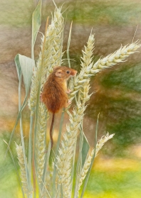 2018-19 PRINT RND1-1st HARVEST MOUSE by Ros Wood