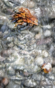 2018-19 PRINT RND1-LEAVES IN A STREAM by Paul Holroyd