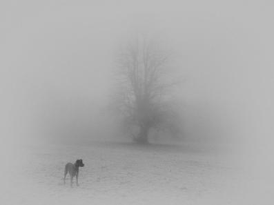 2018-19-print-rnd2-DOG IN THE FOG BY Ros Wood