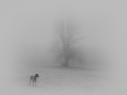 2018-19-print-rnd2-DOG IN THE FOG BY Ros Wood
