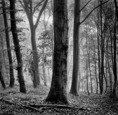 2018-19-print-rnd2-RAIN IN FRISTON FOREST by Steve Yates