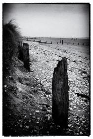 2018-19-print-rnd2-SEA SHELLS ON THE SEA SHORE by Chris Heath