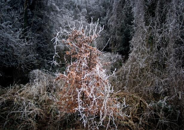 2018-19-print-rnd3-NATURE'S WORK by Stephen Yates