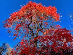 Autumn Reds_Andrew Kernan_
