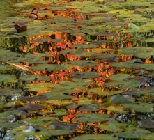 2019-20 PRINT rnd2 - REFLECTIONS OF AUTUMN by Phil Marsden