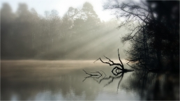 exhibition image (Autumn 2020) | The Log, the Lake and the Light by Steve Peel